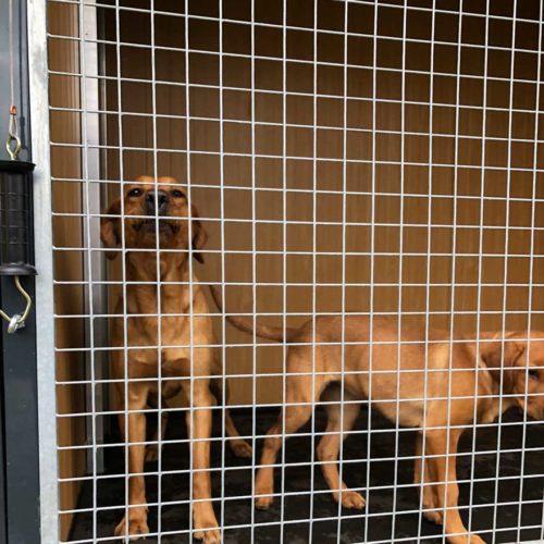 boarding kennels in the UK